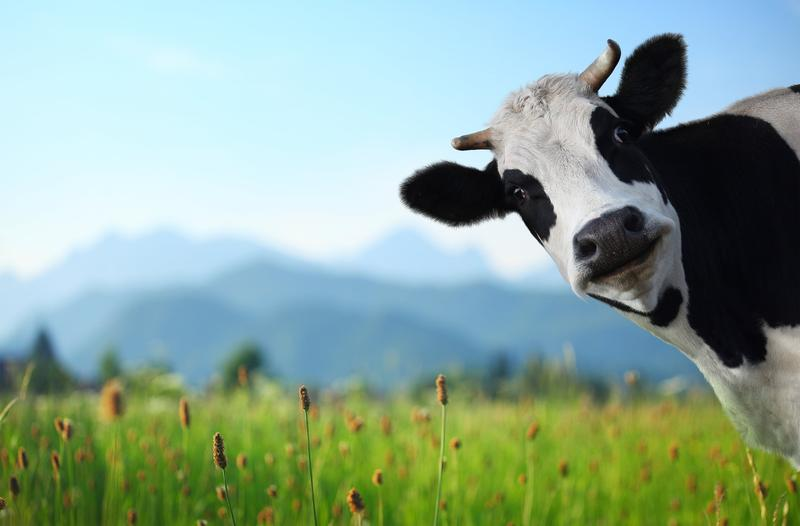 connect your cow for  1 79 per month  via spark