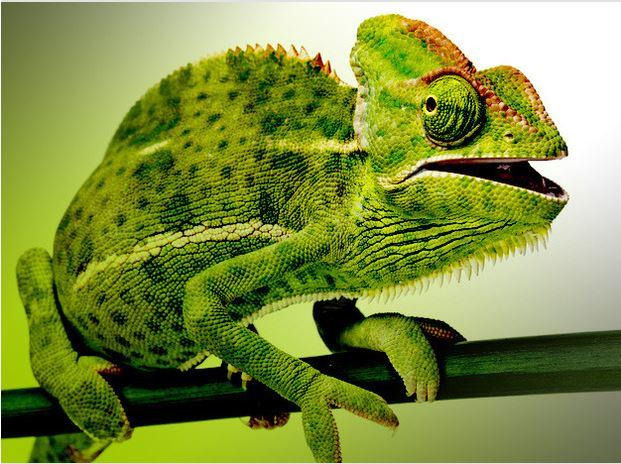 In Pictures: What's new in SUSE Linux 12?